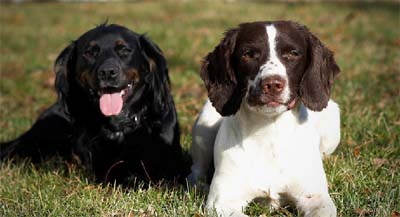 Barley & Millie of PrairieRose Gundogs